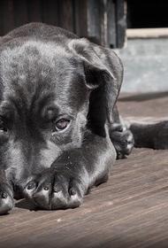 Британские власти одобрили эвакуацию двухсот собак и кошек из Кабула