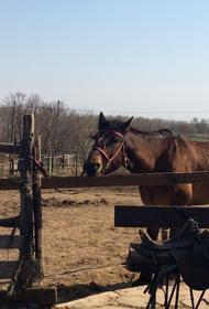 Хабаровским конным клубом вновь заинтересовался СК после травмы клиентки