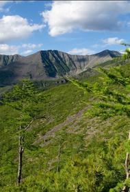 Ущерб природе частично возместили в заказнике «Баджальский»