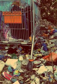 В чём вред пластика для живых организмов