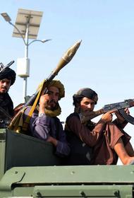 В посольстве Афганистана заявили, что получают сообщения о «жутких» действиях талибов
