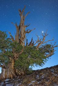 BGCI выпустил доклад о состоянии деревьев в мире, 30% находится на грани исчезновения