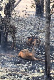 Якутия бойкотирует разрешение охоты в сгоревших лесах