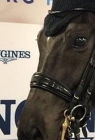 Польша дала визу чемпионке Белоруссии по конному спорту Ольге Сафроновой