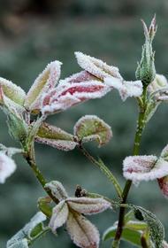 МЧС предупредило о заморозках до минус двух градусов  на юго-востоке Подмосковья ночью и утром 7 сентября