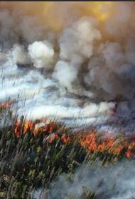 Из-за лесных пожаров в Сибири образовалось 800 мегатонн углекислого газа