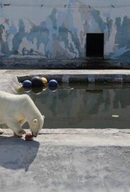 В хабаровский зоосад привезут белого медвежонка из Якутии