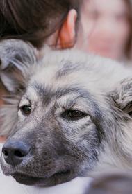 Сергунина: В Москве пройдет акция «В добрые руки» в поддержку животных из приютов
