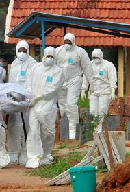 По мнению экспертов, вспышка Нипаха едва ли станет подобной коронавирусной пандемии