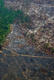 WWF: Правительство должно остановить британские банки, финансирующие вырубку лесов