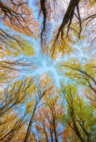 Метеоролог Тишковец сообщил, что на следующей неделе в Москву придет «настоящая осень»
