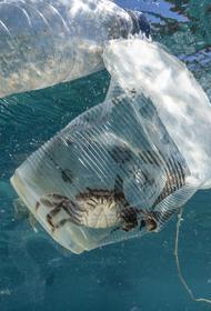 Океанический пластик под воздействием солнца превращается в смесь новых токсичных веществ