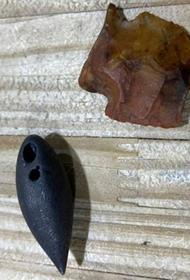 В желудке аллигатора нашли два артефакта возрастом от 4000 до 6000 лет