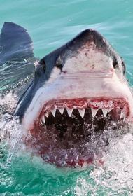В Австралии атаки акул на людей будут называть «инцидентом взаимодействия» или «негативной встречей»