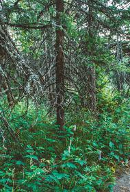 В Челябинской области пройдет акция «Сохраним лес»