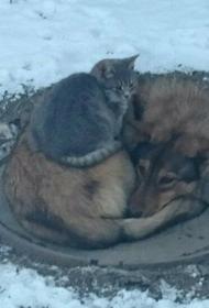 Пермякам запретят подкармливать бездомных животных, что обрекает их на гибель