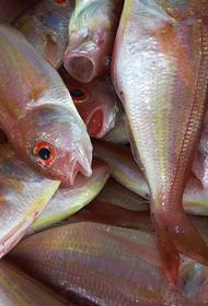 Власти Литвы раскритиковали Россию за ее действия по регулированию рыболовной деятельности в Балтийском море