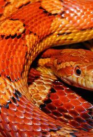Ученые выяснили, почему змеи выжили при столкновении с астероидом много миллионов лет назад