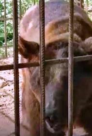 Туристы спасли из дагестанского ресторана медведя, которого потом в отместку убили