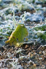 С 20 сентября в Хабаровском крае начнутся заморозки