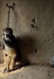 В каких странах запрещено использование зверей в качестве развлечений и зрелищ