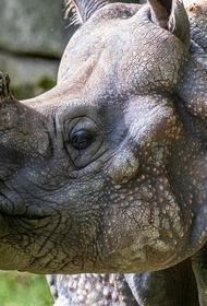 Как перевозить носорогов и лечит ли оргазм насморк: лауреаты Шнобелевской премии ответили на странные, но важные вопросы