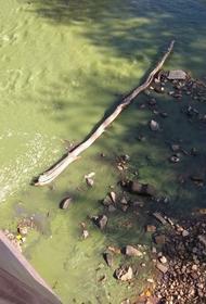 Река Ай в Златоусте окрасилась в неестественный грязно-зелёный цвет