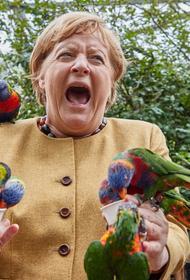 На канцлера ФРГ Ангелу Меркель «напал» попугай, когда она кормила птиц в парке Марлоу