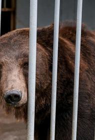 В зоопарке Челябинска кто-то отравил бурых мишек