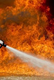 2021 год стал рекордным для России по площади лесных пожаров