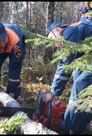Экипаж разбившегося в Хабаровском крае Ан-26 мог перепутать направление