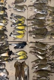 Сотни перелетных птиц погибли во время миграции разбившись о Нью-Йоркские небоскребы