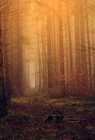 Пропавшего в Свердловской области срочника обнаружили в лесу без признаков жизни