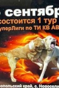 В Ставрополье, практически открыто, проводят собачьи бои