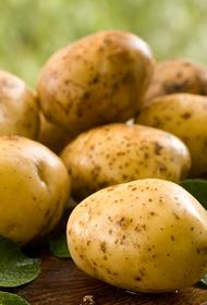 Минсельхоз увеличил импорт картофеля на 70%