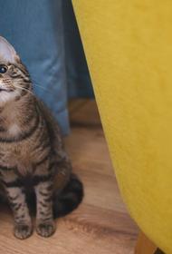 Ученые объяснили роль охоты в питании домашних кошек