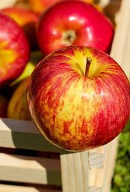 Врач–диетолог Елена Соломатина рассказала о пользе и вреде яблок
