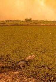 В Амазонке небывалая засуха