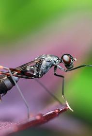 Ученые выявили эволюцию муравьёв-паразитов по ДНК