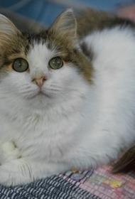 В Челябинске проводят бесплатную вакцинацию домашних животных от коронавируса