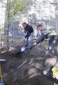 Челябинску вернули даурские лиственницы