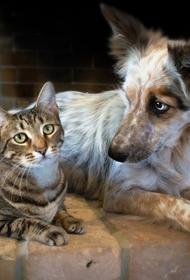 В Казахстане предложили запретить есть домашних животных