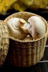 Лечение депрессии: ученые из США доказали пользу грибов