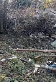 Упавший Ан-26 нанес хабаровскому заповеднику ущерб в размере более 4 млн рублей