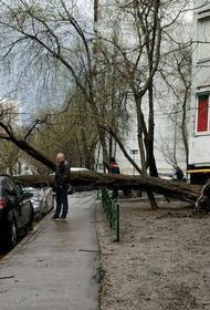 В МЧС предупредили москвичей о ветре с порывами до 20 метров в секунду до вечера пятницы