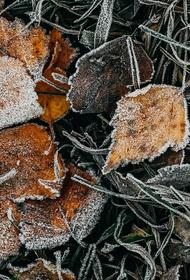 Синоптик Тишковец предупредил москвичей о «самой холодной ночи» с начала осени