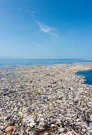 Из пластикового мусора в океане выстроилась пищевая цепочка
