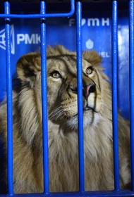Алексей Текслер попрощался со львом Симбой и леопардом Евой