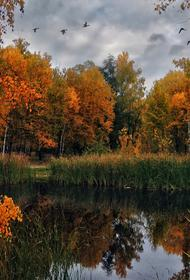В Брянске планируют вырубить восемь гектаров леса без референдума