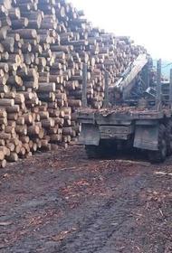Пять уголовных дел завели в Хабаровске за продажу леса в Китай на 3,2 млрд рублей